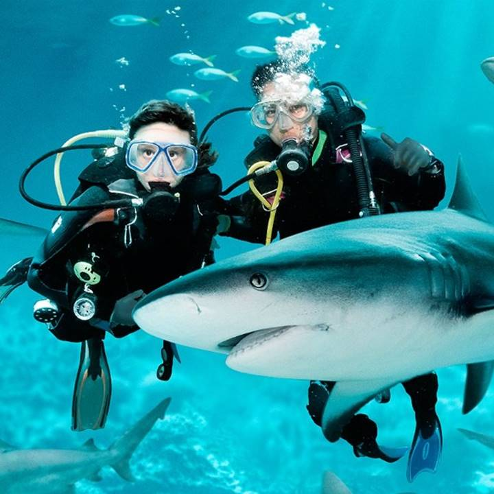 Win a Trip for two people to Hollywood, Florida for a Shark Dive Experience