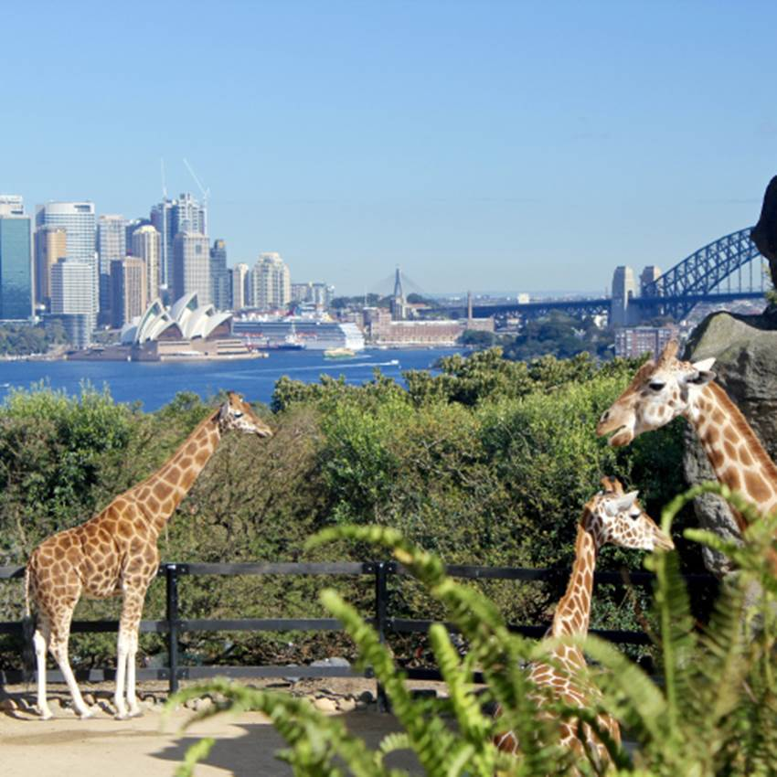 Win The Ultimate Zoo Experince At Taronga