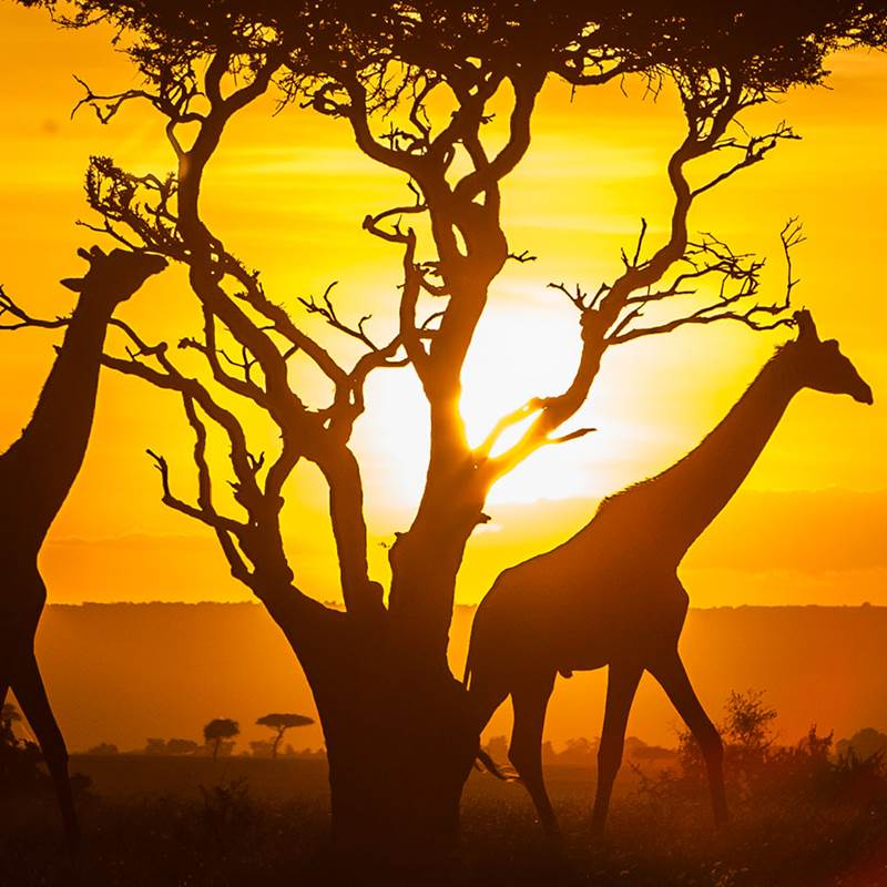 Win a Trip to Kenya