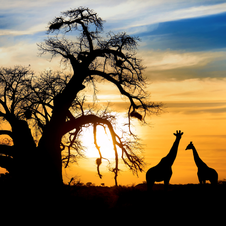 Win an African Safari Adventure, thanks to Tomorro + Essential Need!