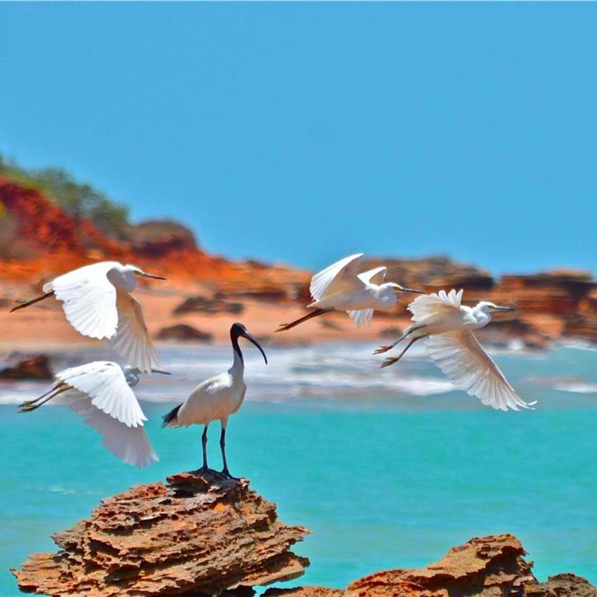 Win A Family Holiday To Broome, WA