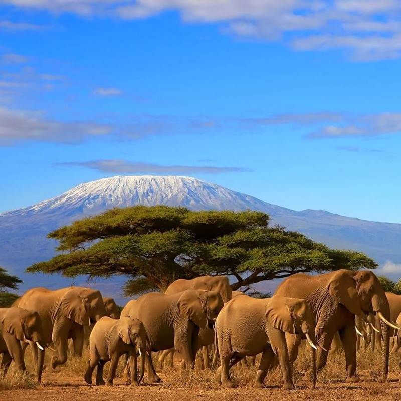 Win a Safari in Tanzania