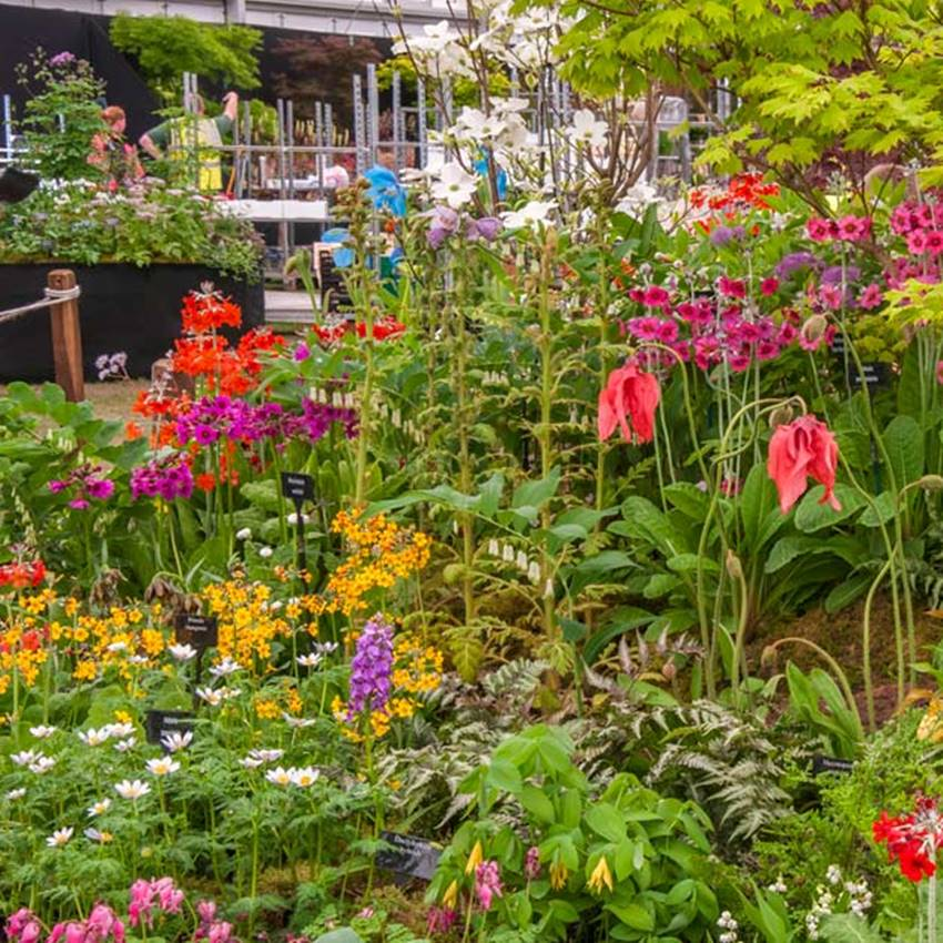 Win A Trip To 2017 Chelsea Flower Show