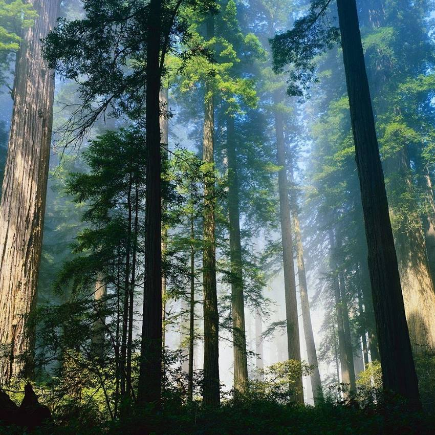 Win a Trip for two to California's Redwood Coast