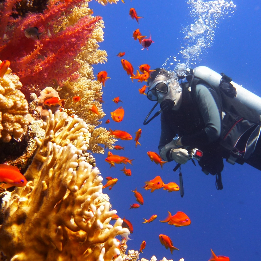 Escape to the Great Barrier Reef for FREE!