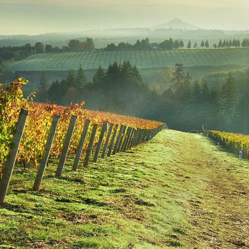 Win a Trip in Oregon's Wine Country
