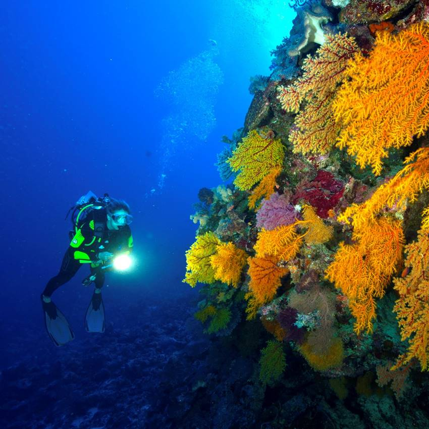 Win A Great Barrier Reef Expedition