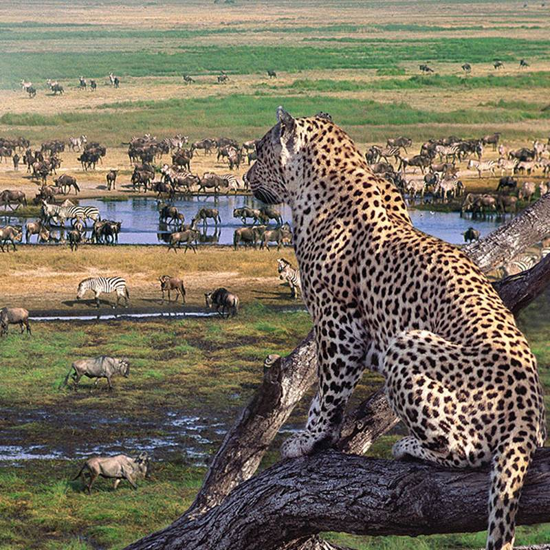 Win a Trip to Serengeti