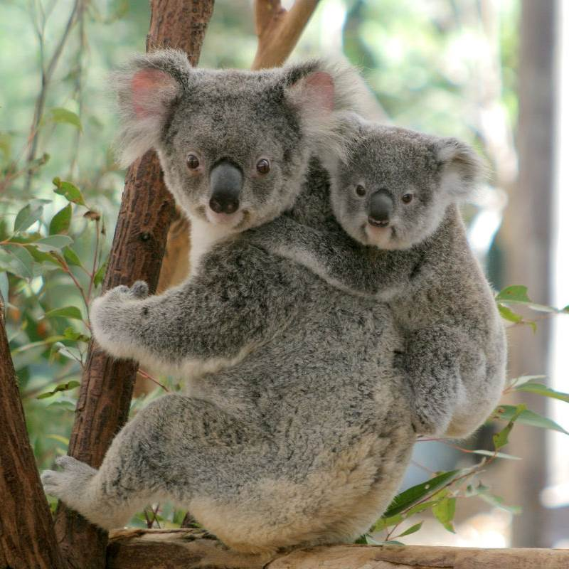 Win a Family passes to Wild Life Sydney Zoo