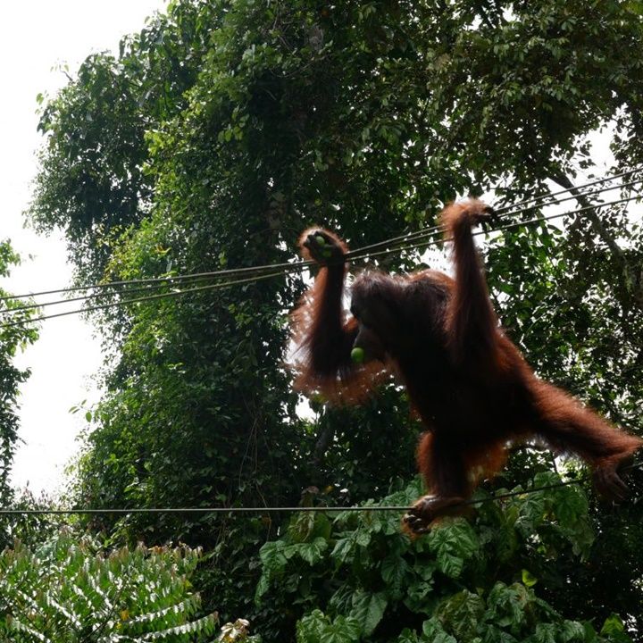 Win a All Inclusive Trip for 2 People to Borneo Including Flights