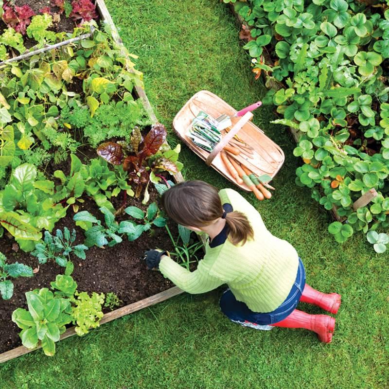 Win a Glorious Organic Veg Patch