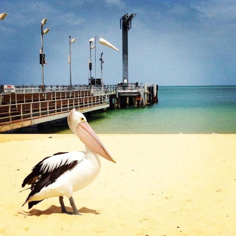 Win a Trip to Moreton Island